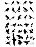 SILHOUETTES OF BIRDS Stock Photos