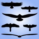 Silhouettes of birds. Stock Photo