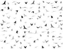 Silhouettes of birds. Black silhouettes of birds on white background Stock Photo