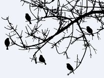 Silhouettes of birds on a branch in winter. Vector drawing of sparrows on a tree branch in the cold season Stock Images