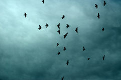 Silhouettes of Birds In Cloudy Blue Sky Stock Photo