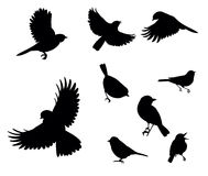Silhouettes of birds Royalty Free Stock Photos