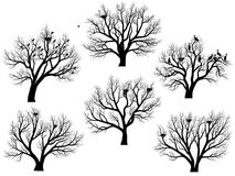 Silhouettes of birds nest in trees without leaves. Stock Images