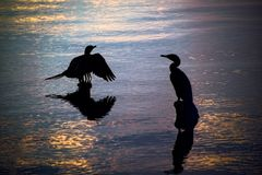 Silhouettes of birds resting on wooden pier residues in a lake d Stock Image