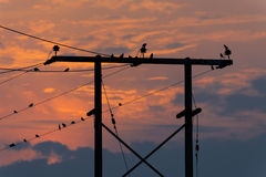 Silhouettes of birds sitting on pole Stock Photos