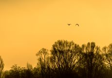 Silhouettes of birds at sunrise in winter over the deciduous trees on the shore of a lake.  stock photography