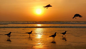 Silhouettes of birds on sunset. Royalty Free Stock Photos
