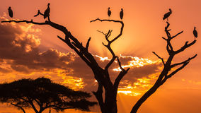 Silhouettes of birds on sunset Stock Photos
