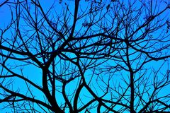 Silhouettes of branches Royalty Free Stock Photo
