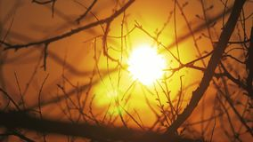 Silhouettes of branches of a tree in the dawn sun Sunrise nature. Trees silhouettes against Sunrise background. tree. Silhouettes of branches of tree in the dawn stock video