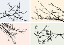 Silhouettes of branches Royalty Free Stock Photos