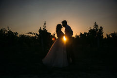 Silhouettes bride groom standing on the vineyard and tenderly looking at each other at sunset. Concept of love and Stock Photos