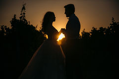 Silhouettes bride groom standing on the vineyard and tenderly looking at each other at sunset. Concept of love and Stock Image