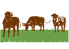 Silhouettes of the brown cows. Three silhouettes of the brown cows on green field Stock Images