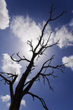 Burnt Bare Tree Branches Silhouettes Stock Photography