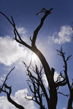 Burnt Bare Tree Branches Silhouettes Stock Photo