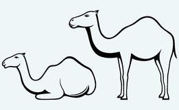 Silhouettes of camel Royalty Free Stock Photos
