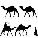 Silhouettes of camels. With camel drovers Royalty Free Stock Photos