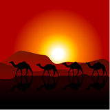 Silhouettes of caravan of camels Royalty Free Stock Photography