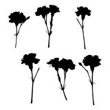 Silhouettes of carnations Royalty Free Stock Images