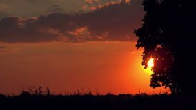 Silhouettes of Cars in Sunset Driving through Countryside stock video footage