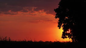 Silhouettes of Cars in Sunset Driving through Countryside stock video