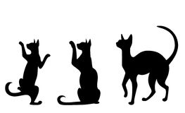 Silhouettes of cats. On a white background Royalty Free Stock Images