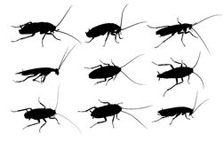 Silhouettes of cockroaches. Stock Images