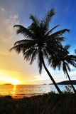 Silhouettes of Coconut Trees. By the beach stock image