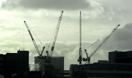 Silhouettes of cranes Royalty Free Stock Photography