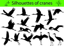 Silhouettes of cranes Stock Photos