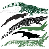 Silhouettes of crocodiles Royalty Free Stock Photos