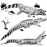 Silhouettes of crocodiles Stock Photos
