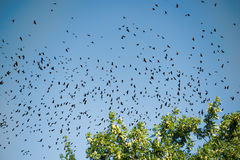 Silhouettes of crows Stock Image