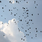 Silhouettes of crows in sky Stock Images