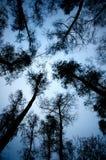 Silhouettes d'arbre Photographie stock libre de droits