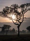 Silhouettes d'arbre Photo libre de droits
