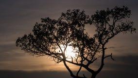 Silhouettes d'arbre Photo stock