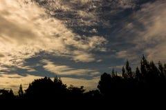 Silhouettes d'arbre contre le beau ciel bleu avec nuageux Vint Photo libre de droits