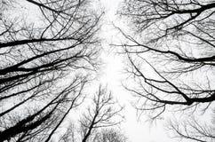 Silhouettes d'arbre contre un ciel nuageux Image libre de droits