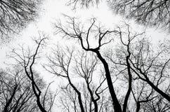 Silhouettes d'arbre contre un ciel nuageux Photos libres de droits