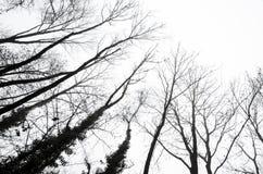 Silhouettes d'arbre contre un ciel nuageux Photographie stock