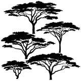 Silhouettes d'arbre d'acacia Photos libres de droits