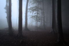 Silhouettes d'arbre dans la forêt foncée avec la brume Photo libre de droits