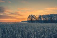 Silhouettes d'arbre dans le lever de soleil d'hiver Photos stock