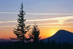 Silhouettes d'arbre dans les montagnes de lever de soleil Images libres de droits