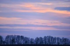 Silhouettes d'arbre dans une rangée Photos libres de droits