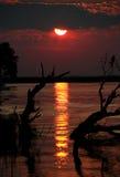 Silhouettes d'arbre de coucher du soleil Photo libre de droits