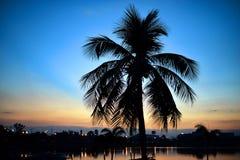 Silhouettes d'arbre de noix de coco au coucher du soleil : foyer mou Photos libres de droits