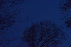 Silhouettes d'arbre, hiver, heure bleue Image stock